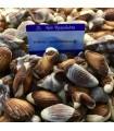 Σοκολατάκια Όστρακα