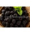 Blackberries (βατόμουρα) Χωρίς Ζάχαρη