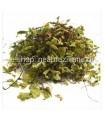 Το Αγριμόνιο (Agrimonia eupatoria ή φωνόχορτο)