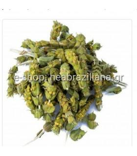 Τσάι Βουνού - Sideritis